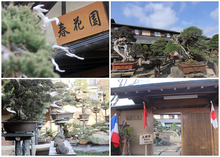 The World of Bonsai at Shunka-en Bonsai Museum