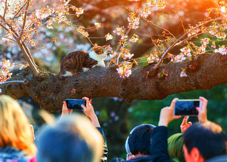 7 Secrets for Snapping Perfect Photos of Sakura