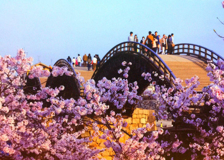 Kintai Bridge (Yamaguchi Prefecture) - Ranked #13 in 2018 for best cherry blossom spots in Japan!
