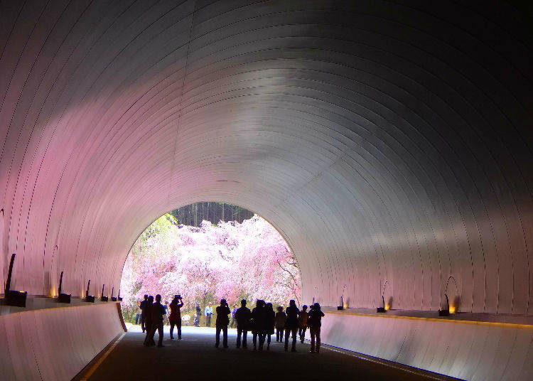 Miho Museum (Shiga Prefecture) - Ranked #49 in 2018 for top cherry blossom places in Japan!