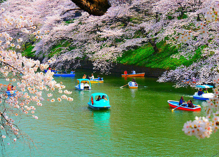 [Movie] Breathtaking Blossoms at Chidorigafuchi – Tokyo's Favorite Sakura Spot