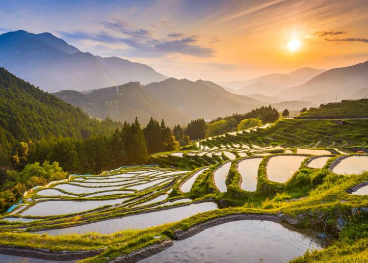 日本らしさや手付かずの自然に魅力を感じる人が多かった!