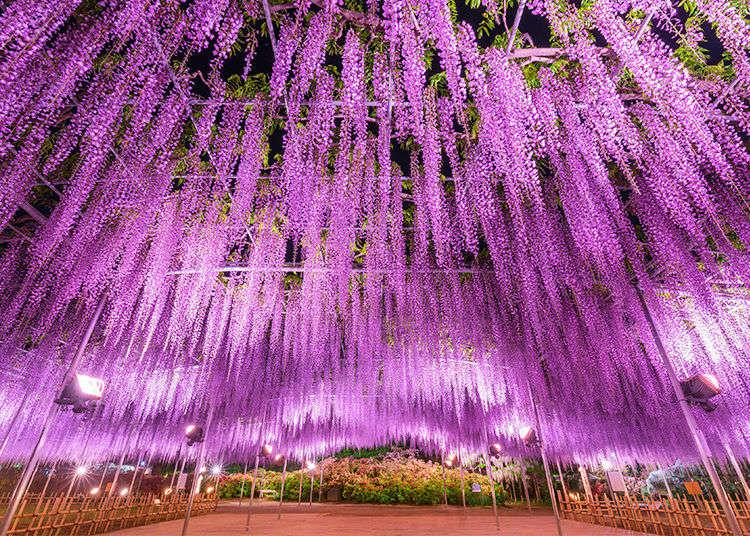 CNNで世界の夢の旅行先に日本で唯一選出!藤の名所、あしかがフラワーパークへ行こう