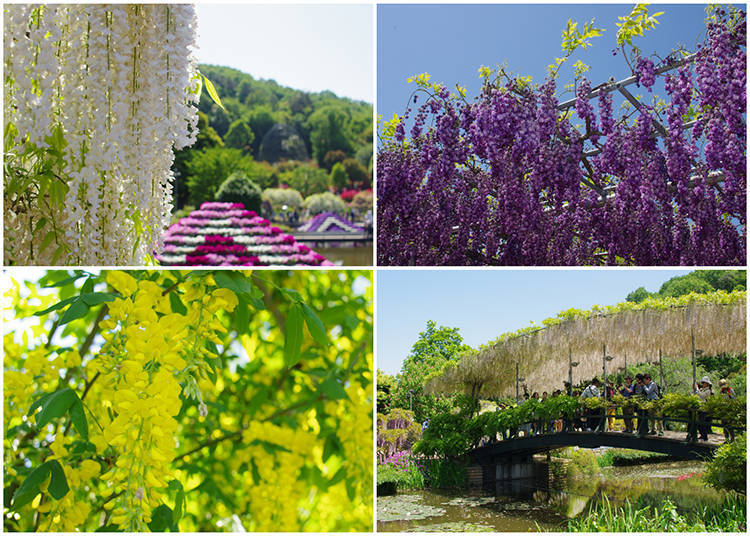 Ashikaga Flower Park: the Most Stunning Wisteria Spot