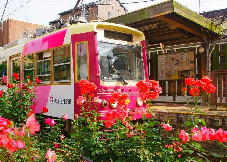A Taste of Retro Tokyo! Rose Viewing on the Tokyo Sakura Tram (Toden Arakawa Line)!
