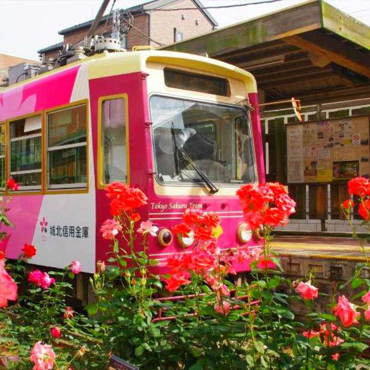 レトロな雰囲気を味わえる!東京さくらトラム/都電荒川線に乗って、美しいバラを観賞!