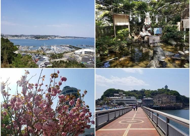 Enjoying Spring in Enoshima!