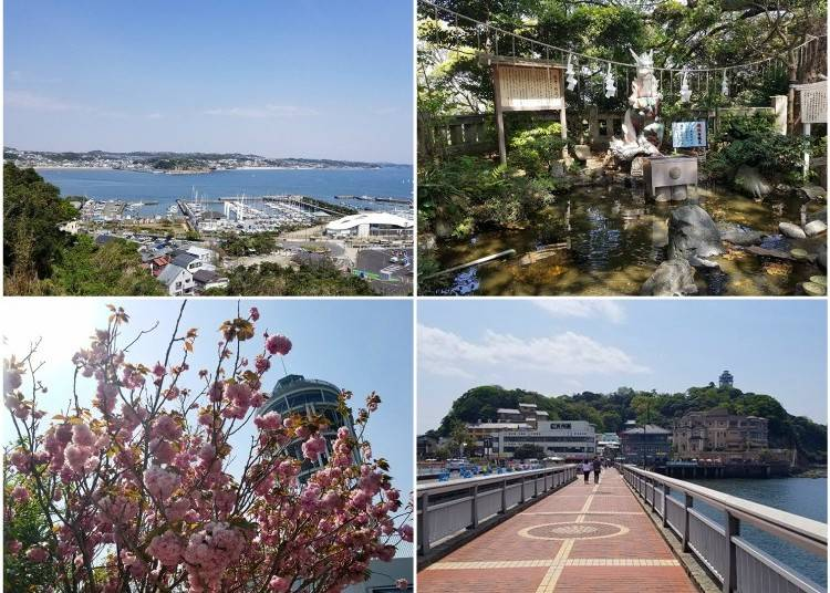 Enjoying Spring in Enoshima!