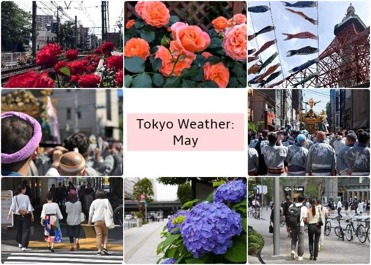 What's the weather like in Tokyo in May? - LIVE JAPAN (Japanese
