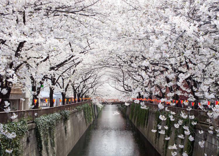좋아하는 사람이 많은 반면 불만의 목소리도!?  '벚꽃놀이'