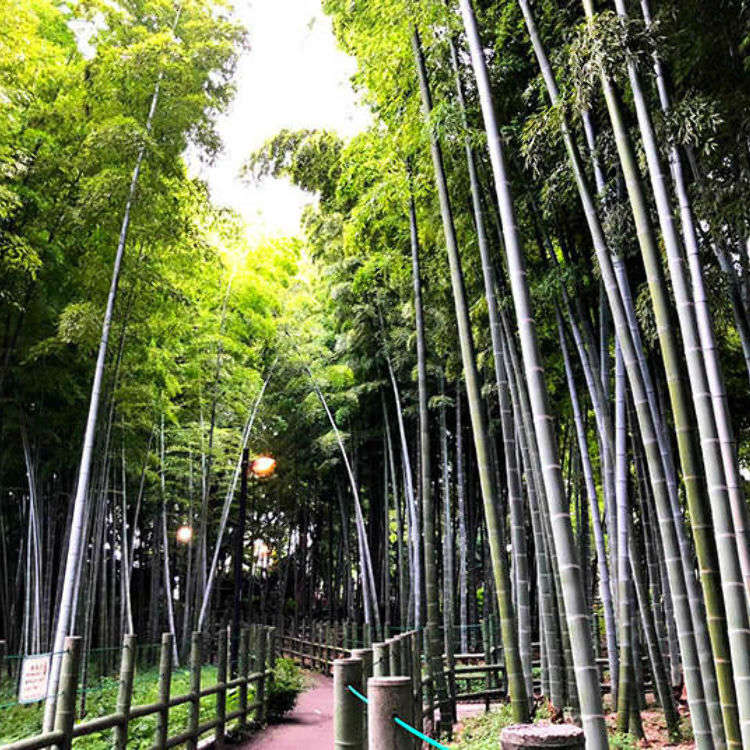 5 Must-See Bamboo Forests Around Tokyo