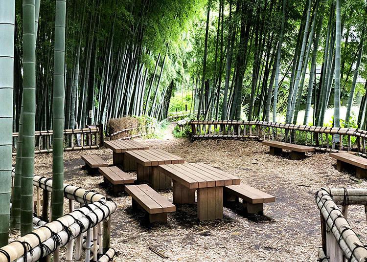 3. Higashikurumeshi Chikurin Park (東久留米市 竹林公園)