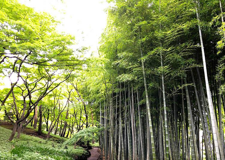 4. Tonogayato Garden (殿ヶ谷戸庭園), Kokubunji
