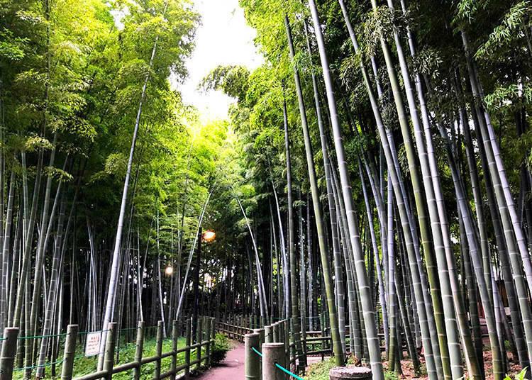 1. Suzume-no Oyado Ryokuchi Park (すずめのお宿緑地公園), Meguro