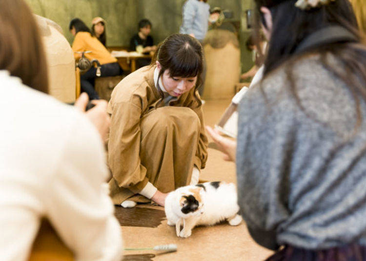 Addicted to Cats! I Want to Come Back to Cat Cafe Temari no Ouchi!