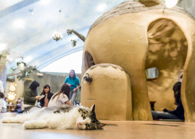 No Extra Charge! Cat Cafe Temari no Ouchi is Great for Those Who Love Cats!