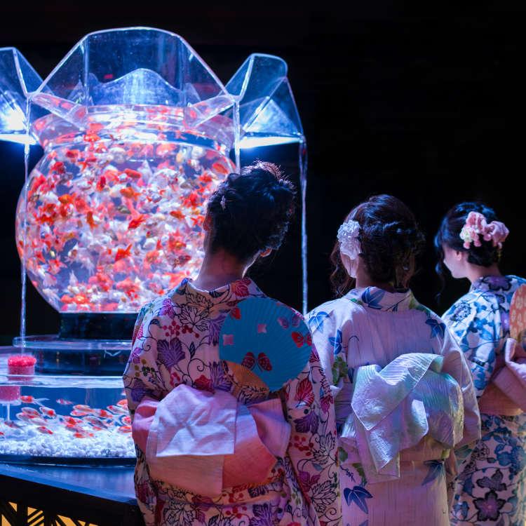 [Movie] Art Aquarium: Experiencing Tokyo's Incredible Living Exhibition!