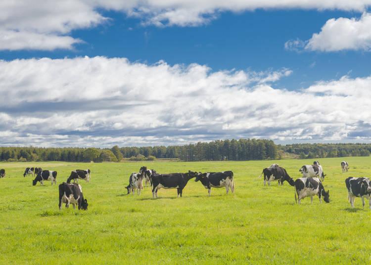 牛乳Q&A(3)北海道産の牛乳は特においしい!?