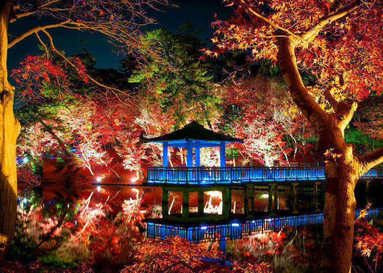 Enjoying Autumn in Japan: Tokyo's Best Autumn Leaf Spots, Lit Up at Night!