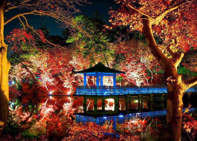 【2018東京賞楓必看】紅葉與燈光打造的絕美景點推薦5選
