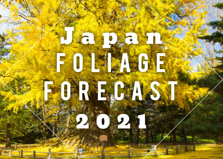 Japan's Autumn Leaf Calendar 2018