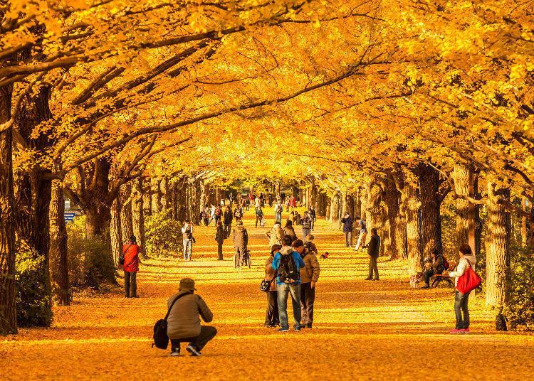 Meijijingu Gaien (Tokyo) – The Golden Ginkgo Promenade