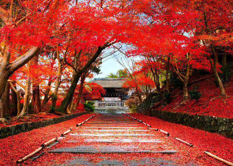 Image result for japan in autumn