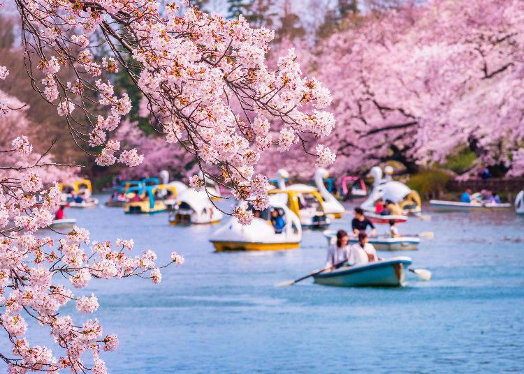 "Kichijoji: ""a Modern Yet Calm Oasis with a Lush Park"""