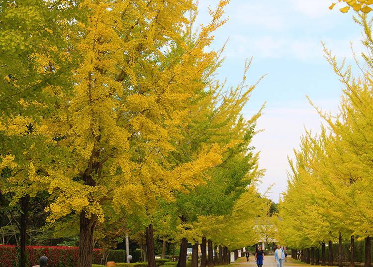 素敵な紅葉写真攻略法④:ラッキーカラーの黄色に包まれて自撮りも