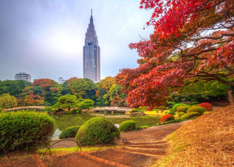 旅行日本前的行李準備就看這篇!東京11~12月天氣情報&服裝搭配小建議