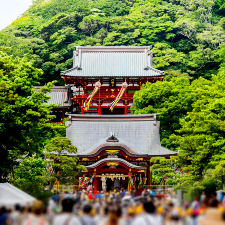 Sightseeing in Kamakura, Japan: Visiting the Ancient Tsurugaoka Hachimangu Shrine
