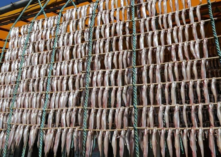 【むかわ町】ししゃもなど魚介類のほか、おいしい農産物もいっぱい