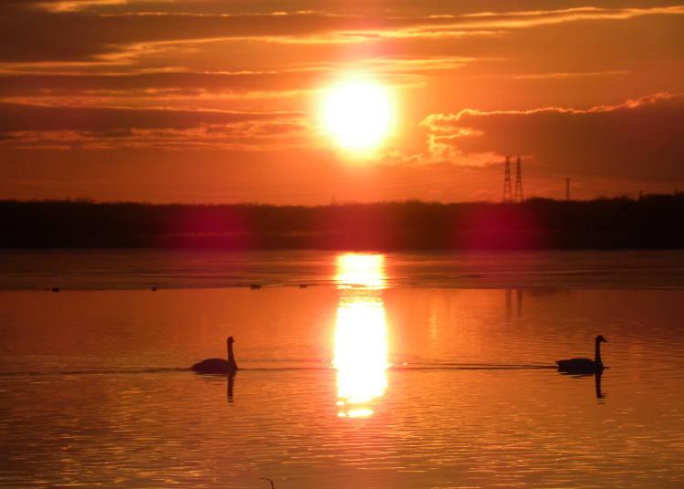 【苫小牧市】胆振東部への玄関口「ウトナイ湖」で野鳥の姿に心を和ませる