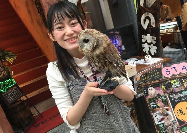 1. Owl no mori - Owl Cafe