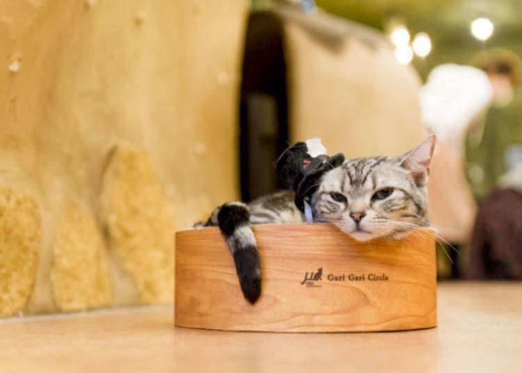 8. Temari no Ouchi - Cat Cafe