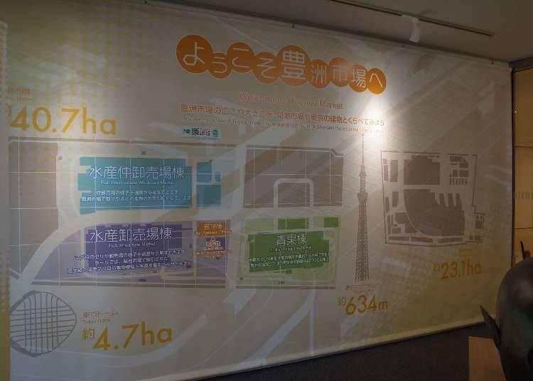 豊洲市場の特徴 ①築地よりもさらに大きい豊洲市場!