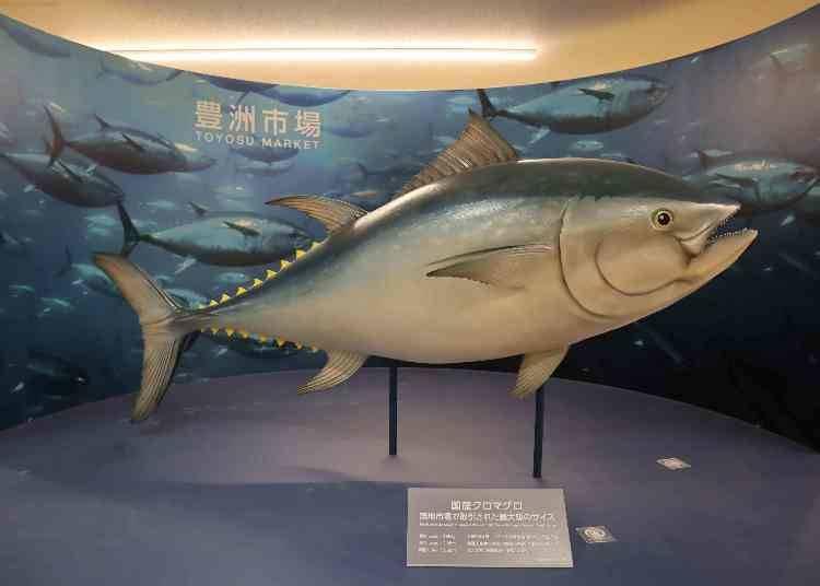 日本市場的代名詞:黑鮪魚競標!想看就到水產批發賣場大樓【第7街區:水產批發賣場大樓】