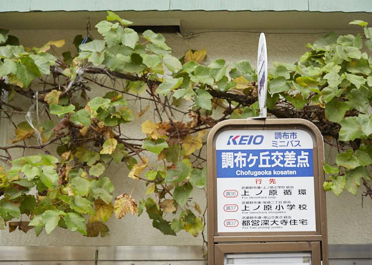 ■宣教師・教育者として日本の教育の発展に尽力した尊者・チマッティ神父の功績を知る