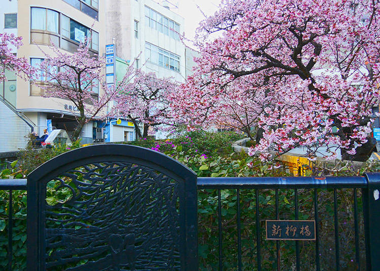 Where are popular places to take pictures of cherry blossoms in Atami?