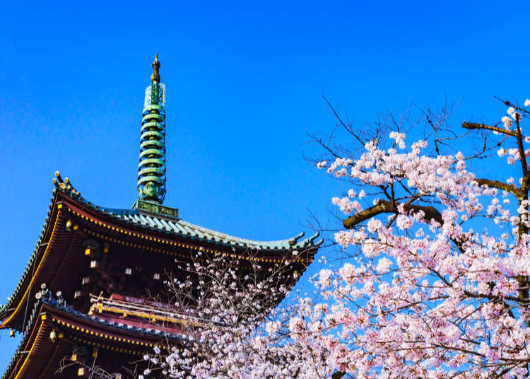 Ultimate Japan Spring Travel Guide: 10 Tips for travelling to Japan in Spring!