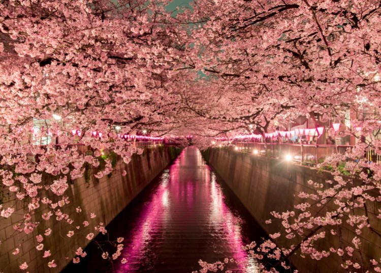 5. Day + Night-time Cherry Blossom viewing