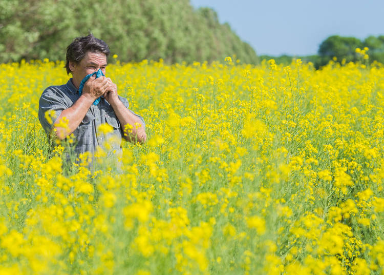 10. Have allergies? Prepare for Hay Fever Season!