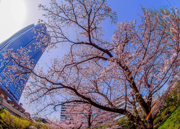#6. 六本木ヒルズ - Roppongi Hills (679.2k Photos)