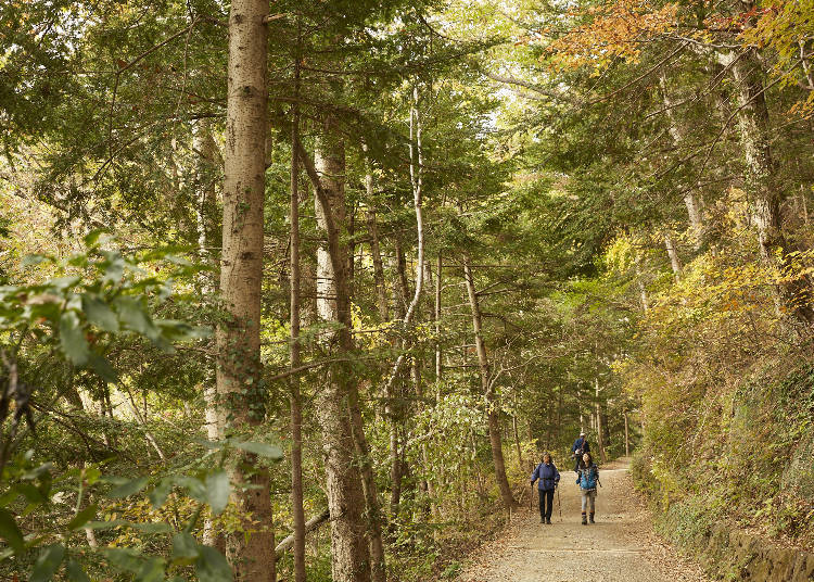 Hot Spot 3: Mount Takao's Peak Only Known to Experts - Conveniently Located Along the Sparsely Populated Fuji Road