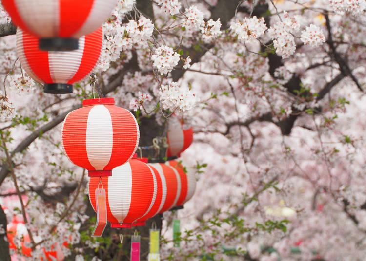 Chiba Prefecture (Average flowering date: March 31)
