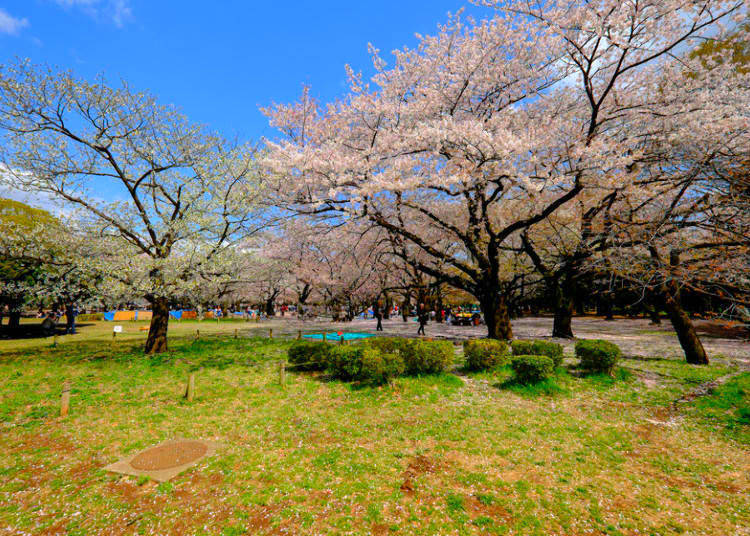12. Enjoy a stroll around Yoyogi Park - a natural park near the surroundings of electric Shibuya