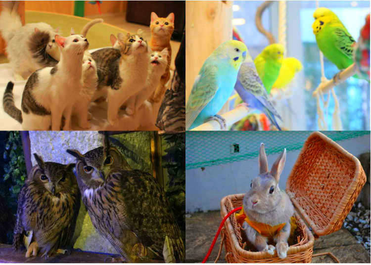 20. Have a cup of coffee with a gorgeous little animal at one of Tokyo's famous animal cafes