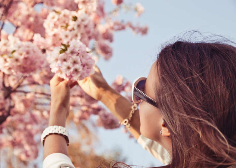 Beyond the Guidebook: Expats Share Their Favorite Hanami Spots and Rituals