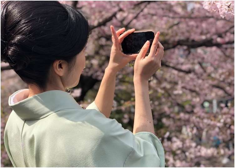 It's Official: Japan's Cherry Blossom Season Has Begun!