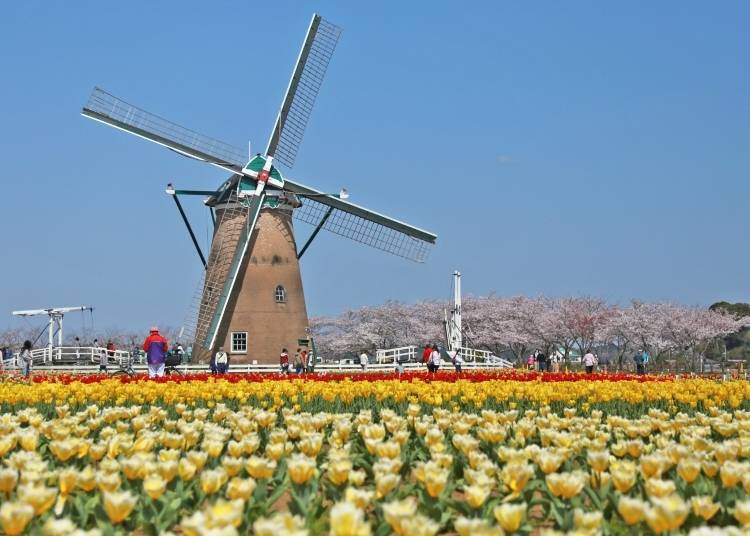 Also during the Tulip Festa: Enjoy the Windmill Festival!